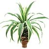 75cm Ananaspensaan taimi sahalaitaisilla lehdill�., discoland.fi
