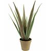 60cm Aloe Ferox ns. Piikkiaaloe, deco-ruukussa., discoland.fi