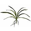45cm Orkidean lehdet ilmajuurilla, vihreäkeltaine