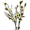 50cm Kamelia koristekasvi valkoisilla kukilla ja 1