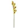 90cm Kymbidi orkidea sitruunanvihreä-rose. Eritt�
