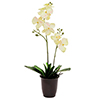 EUROPALMS 57cm Orkidea, v�ri kerma, musta deco-ruukku. Orchid, cream. Natural looking color spots fo
