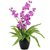 80cm Orkidea, kolmella kukinnolla, jossa violetin , discoland.fi