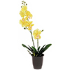 57cm Orkidea, v�ri keltainen, musta deco-ruukku., discoland.fi
