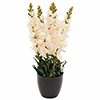 EUROPALMS 65cm Leijonakita, v�ri valkoinen, deco-ruukku. Antirrhinum, white. Flower decoration for f