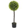 90cm Puksipuu, kirkas vihreä, puutarhurinruukku,