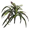 40cm Ihmepensas on tyräkkikasveihin kuuluva pensa