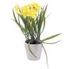 22cm Narsissi kuusi kukkaa, väri keltainen, deco-