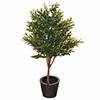 130cm Oliivipuu, lehtien alapuolet hopeanhohtoisia
